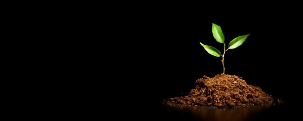 رشد و توسعه می تواند تمایز را از بین ببرد