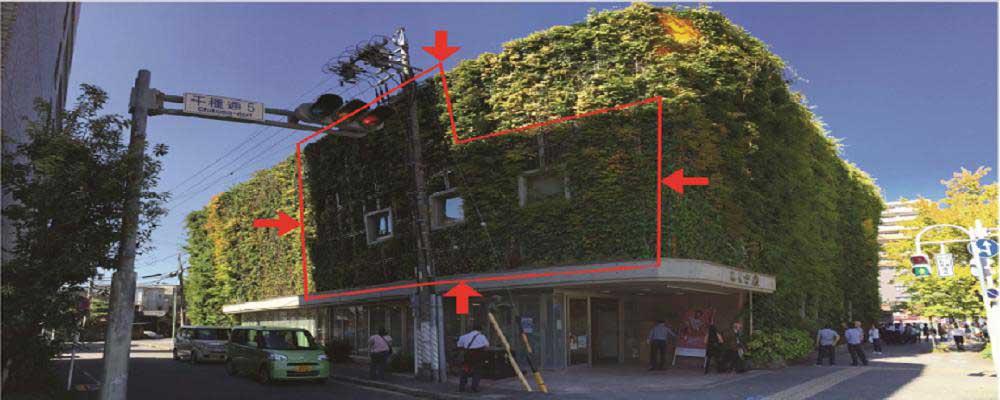 آخرین تحقیقات پیرامون دیوارهای سبز